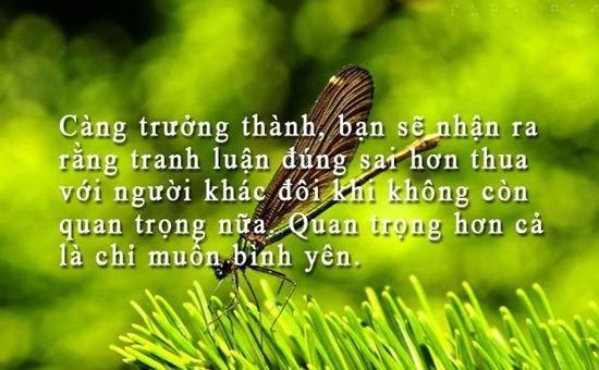 stt hay cuong song hanh phuc